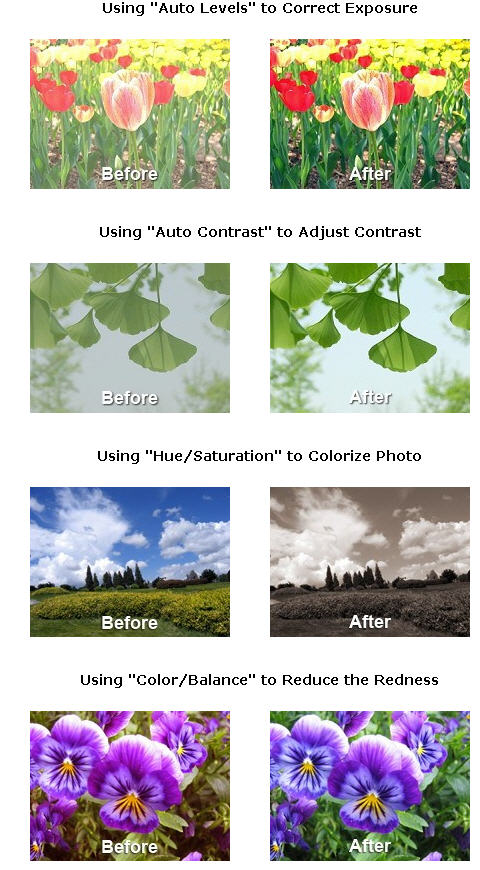 Photo Editing with free Picture Editor SunlitGreen - Techblissonline